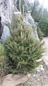 Offerta alberi di natale!!!!